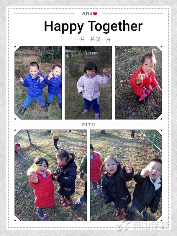 中班摘树叶活动《秋天的叶》