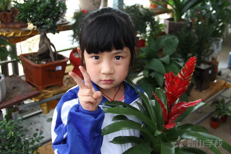 """3.12植树节西山幼儿园开展""""播种绿色,拥抱春天""""户外拓展活动"""