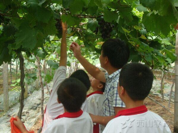 【暑假实践】一起去摘葡萄欢乐多