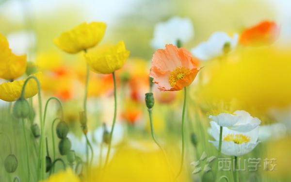 【征文】美丽的西山——张余阳 福清西山学校四年6班