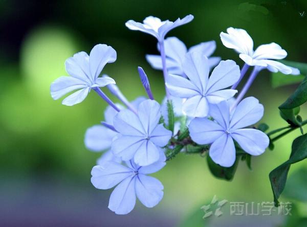 崔永元是如何评价北京十一学校与河北衡水中学的