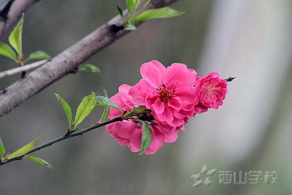 【征文】如风,如雨,如光,如你——福清西山学校小学部五年2班 陈梓晴