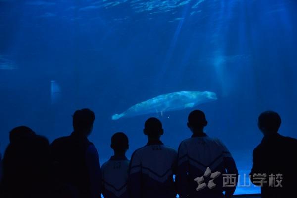 走进海洋世界 探寻生命奥秘——西山学校初中部开展永泰欧乐堡海洋世界实践活动