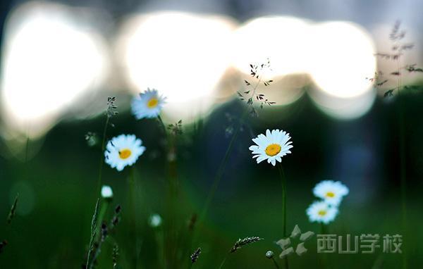 生命是一朵花